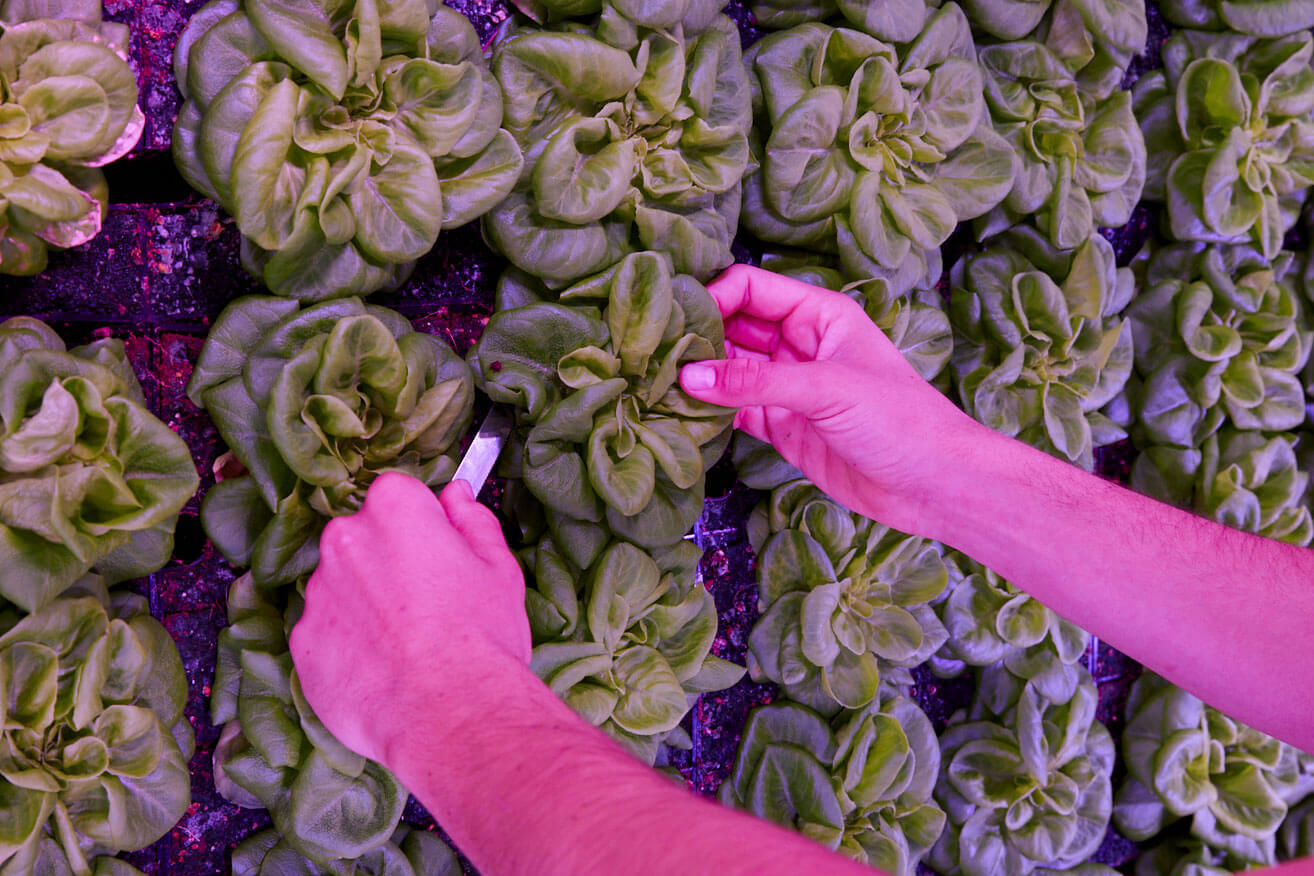 What is Indoor Vertical Farming